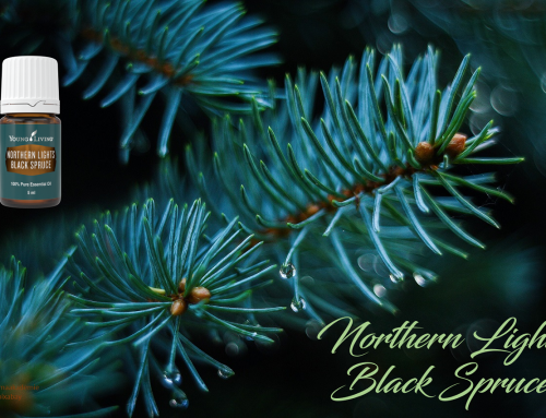 Oil of the week: Northern Lights Black Spruce