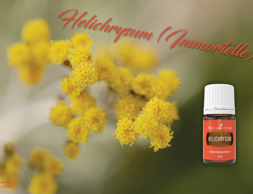 Oil of the week: Helichrysum