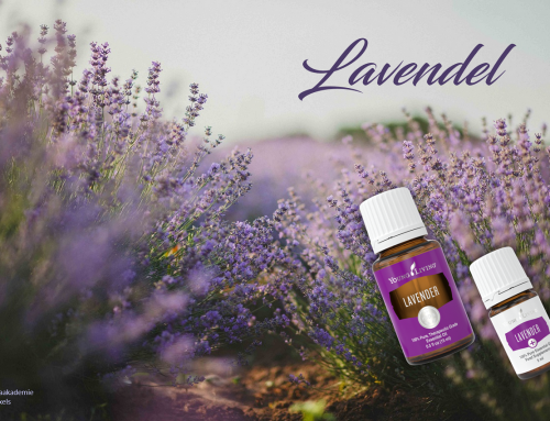 Oil of the week: Lavendel