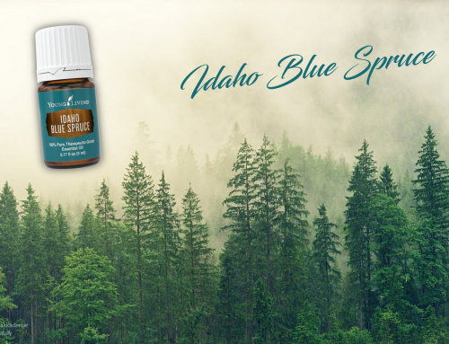 Oil of the week: Idaho Blue Spruce