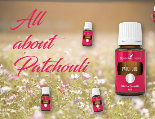 All about Patchouli – was du noch nicht wusstest