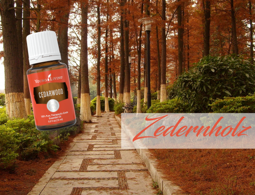 Oil of the week: Cedarwood