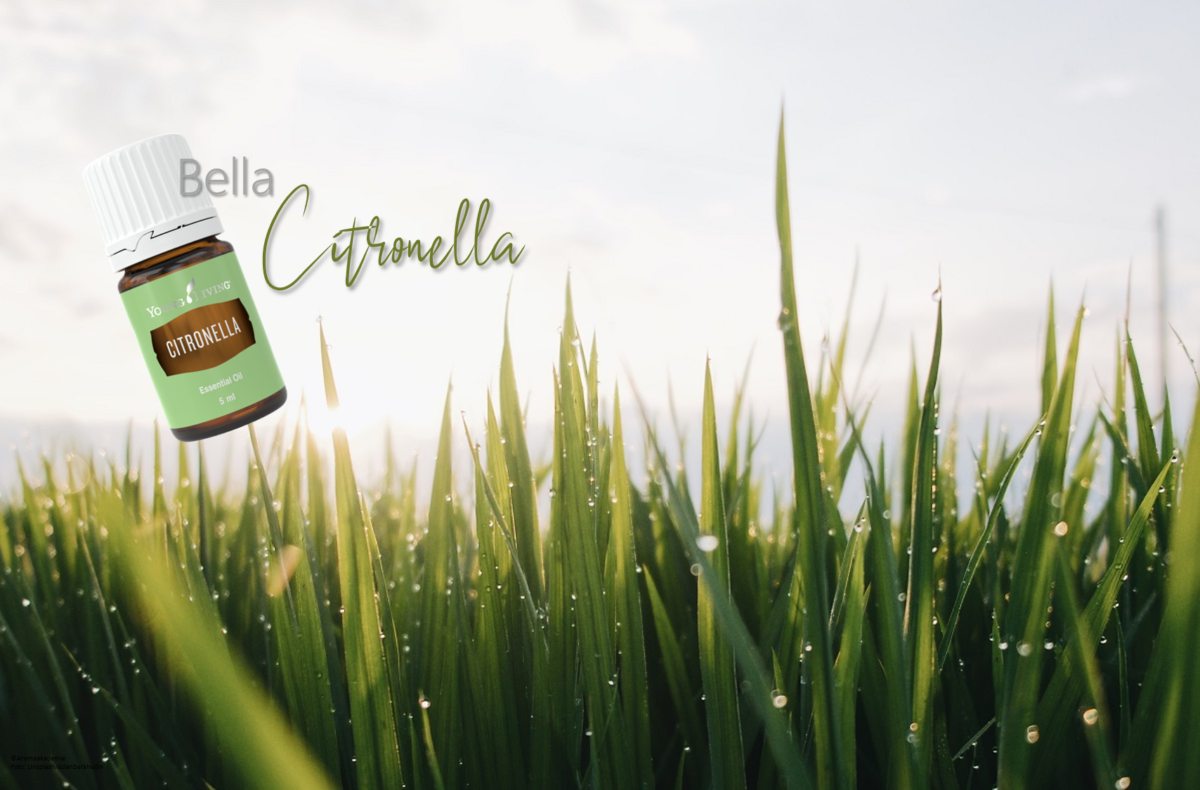 Oil of the week: Citronella
