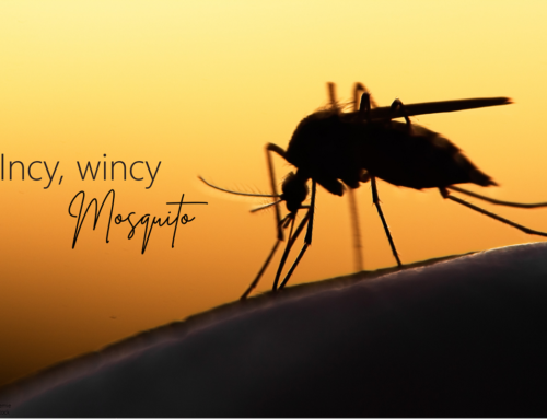 Incy, wincy Mosquito!